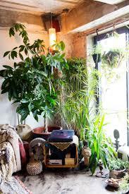 Interior Garden Plants 121 Best Urban Jungle Images On Pinterest Plants Indoor Plants