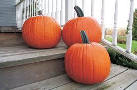 plastic pumpkins producing pumpkins farming