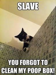 Funny Cat Memes - funny cat memes facebook