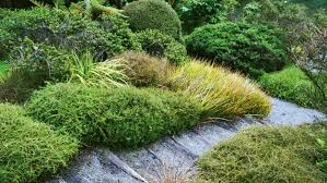 best native plants the best native ground covers for kiwi gardens ground covering