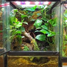 best 25 reptile terrarium ideas on pinterest reptile enclosure