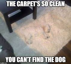 Carpet Cleaning Meme - top care cleaning services