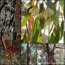 australian native plants brisbane plant inspirations plant nursery sales online delivered