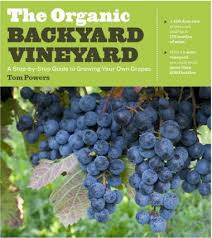 Planting Grapes In Backyard Tips To Planting Backyard Grapes For Easy Maintenance Oregonlive Com