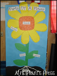 Life Cycle Of A Flowering Plant - the plant life cycle