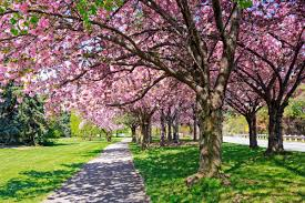 hiring an arborist 20 things to know reader u0027s digest