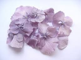 Real Flower Petal Confetti - the confetti blog new hydrangea petals from the real flower petal