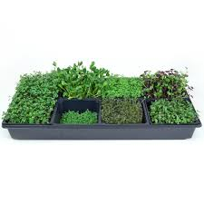 amazon com hydroponic sectional microgreens growing kit grow