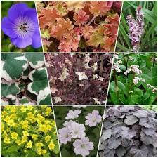 giardini rocciosi in ombra mix di 15 piante da ombra per vasi e fioriere vivaio un
