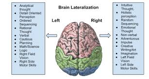 Right Side Human Anatomy Drawing On The Right Side Of The Brain Lessons Tes Teach