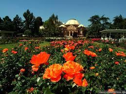 beautiful rose garden wallpaper ckqwgh intended design