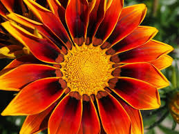 Pretty Orange Top 10 Most Beautiful Flowers In The World The Mysterious World