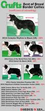 australian shepherd crufts 2015 inbred crufts border collies