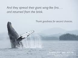 Whaling Meme - humpback whale the marine detective