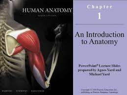 anatomy coloring book pearson anatomy coloring book derters portfolio on