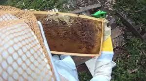 backyard beekeeping the first 72 hours youtube