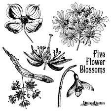 25 unique vector flowers ideas on doodle