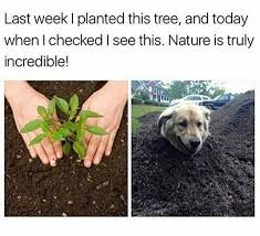 Tree Meme - doggo tree meme by theawesomejpc memedroid