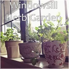 Window Sill Herb Garden by Let U0027s Drink Coffee Darling Windowsill Herb Garden