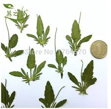 Wholesale Flowers Near Me Aliexpress Com Buy Original Pansy Leaves Diy Handmade Material