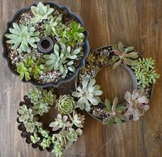 succulents and thrifty finds planting in cake pans ideas