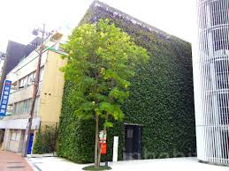striking japanese bike parking lot is completely overgrown with