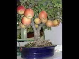 538 best bonsai tree basics with exles images on
