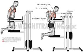 Triceps Bench Dips Machine Assisted Triceps Dip Exercise Instructions And
