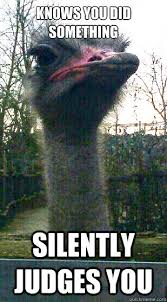 Ostrich Meme - judgmental ostrich memes quickmeme