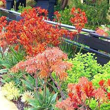 Southern Garden Ideas Southern Landscaping Ideas Amazing Rock Landscaping Ideas For