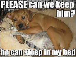 Meme Joke - he can sleep in my bed funny joke meme