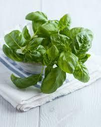 herbe cuisine comment utiliser le basilic en cuisine
