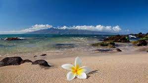 tropical island paradise flowers plumeria hawaiian tropical island paradise sea beach