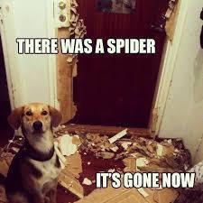Funny Spider Meme - spider meme