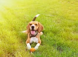 heat stroke dogs petmd