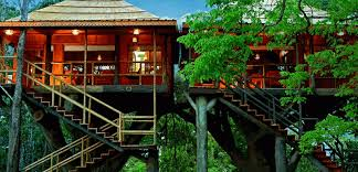 Best Tree houses in Thekkady  Kerala Tourism Blog