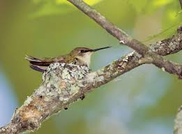 into the hummingbird nest storey publishing