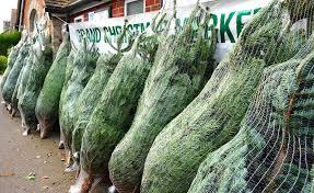 christmas tree for sale burbage christmas tree sale market home