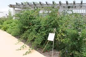 exploring fun foods powell gardens kansas city u0027s botanical garden
