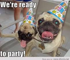 Pug Birthday Meme - 20 very funny birthday animal pictures and images