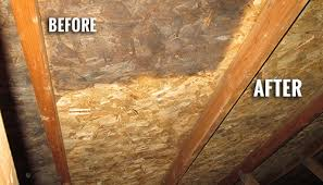 What Causes Mould In Bathrooms Surviving Mold In Your Attic How To Kill Attic Mold