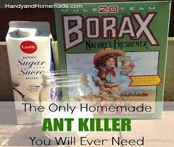 Natural Ant Killer For Kitchen by Homemade Ant Killer Recipes Diy Projects Craft Ideas U0026 How To U0027s