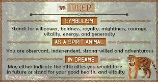 tiger meaning and symbolism the astrology web