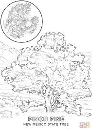 new mexico state tree coloring page free printable coloring pages