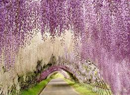 Wedding Arches Buy Aliexpress Com Buy Upscale Artificial Silk Wisteria Flowers For