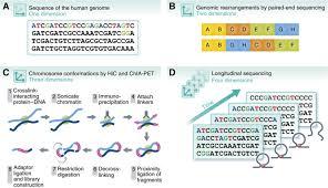 high u2010throughput sequencing for biology and medicine molecular