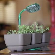 growing herbs indoors under lights 23 best led grow lights images on pinterest plants hanging