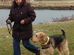 how to stop aggressive dog barking at people canine behavior