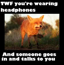 Meme Fox - fox meme by plantdogs on deviantart