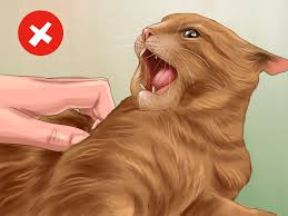 how to diagnose and treat hyperesthesia syndrome in cats 11 steps